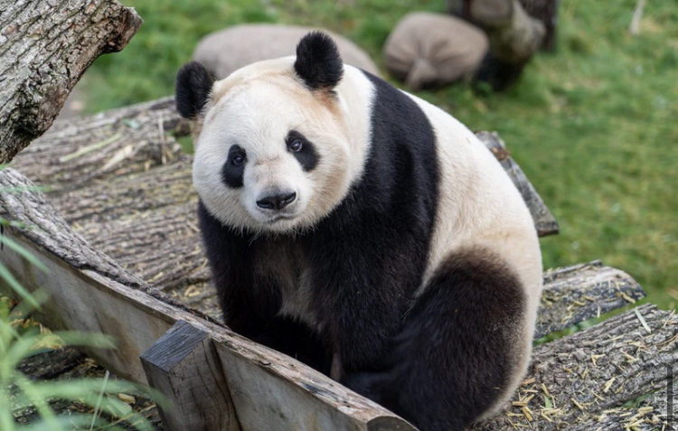 Top Virtual Zoo's for National Zoo Lovers Day 2021