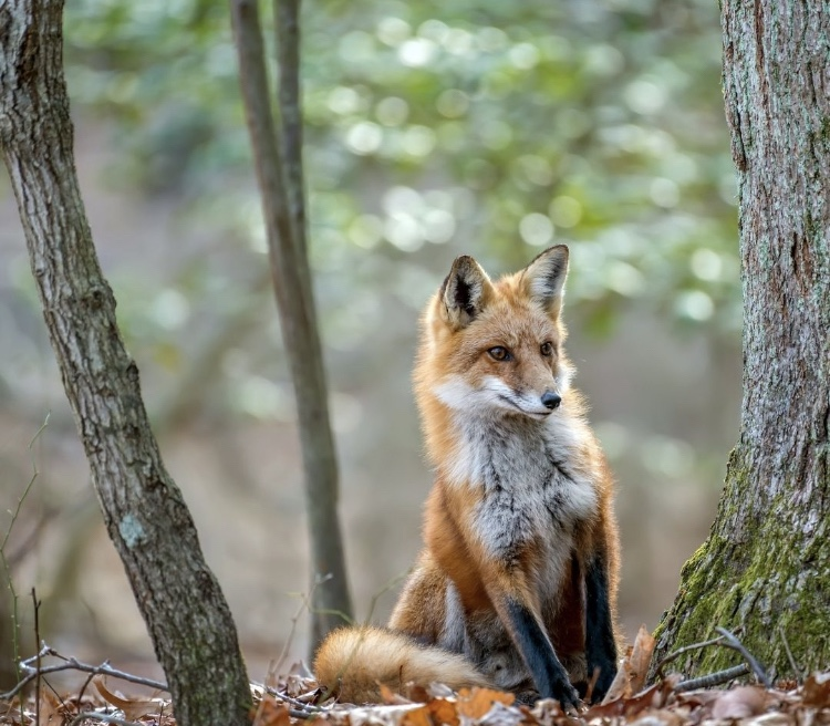 Top 10 Most Interesting Foxes in the World